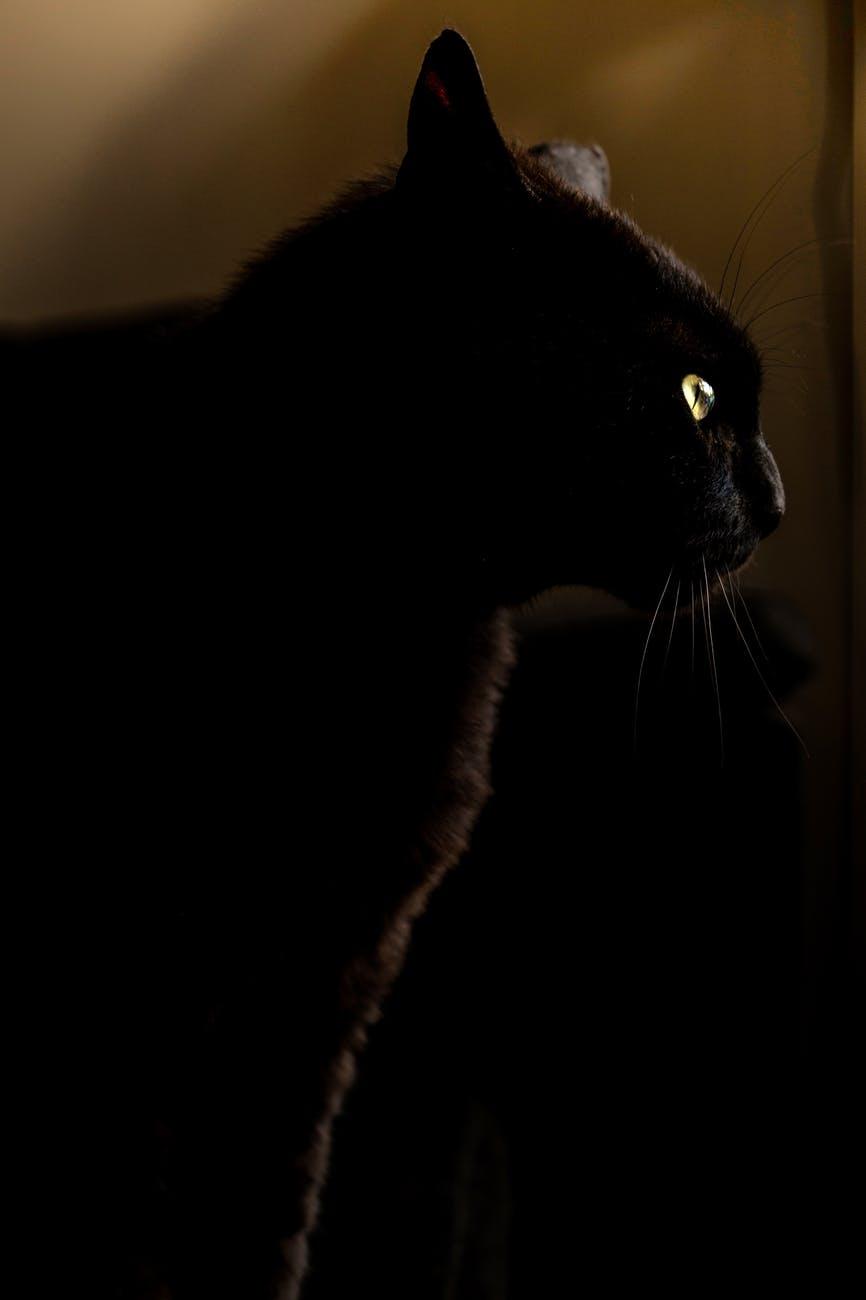 night animal pet eyes