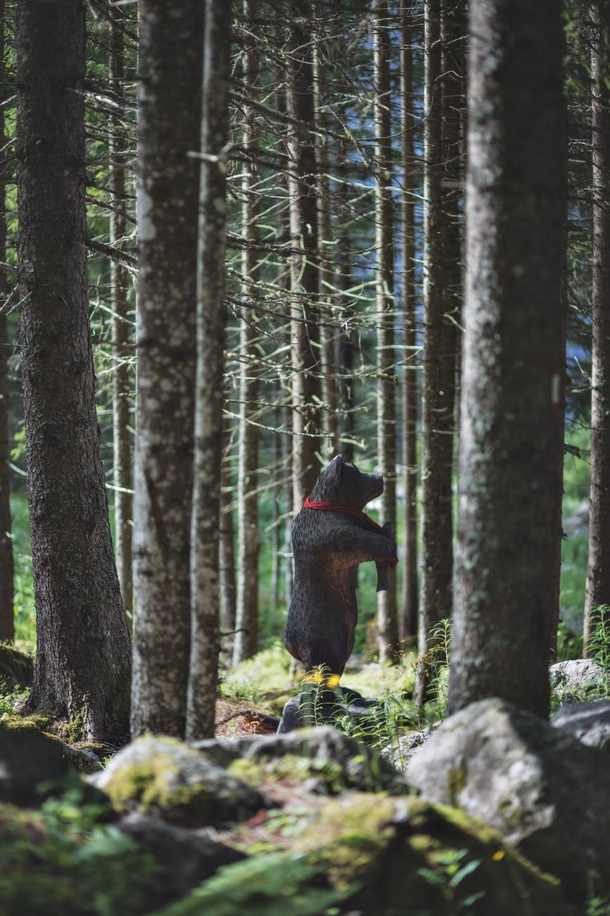 black bear toy on forest